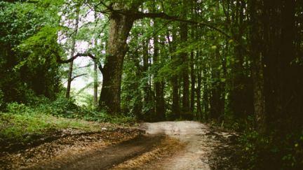 Does Nature Make You Pray?